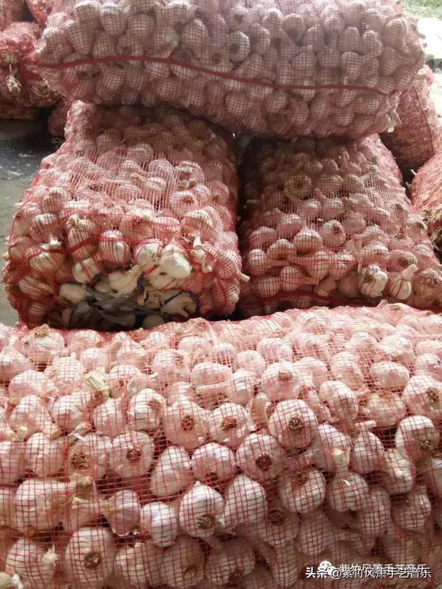 中国兰陵——苍山四六瓣天下第一蒜