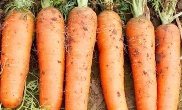 买胡萝卜时,看到这3种胡萝卜扭头就走,再便宜也不能要
